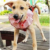 Adopt A Pet :: Bonny - Surrey, BC