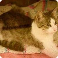Adopt A Pet :: Cleopatra - Dallas, TX