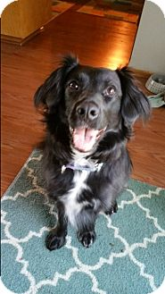 Border Collie Mix Dog for adoption in Midwest (WI, IL, MN), Wisconsin - Penny
