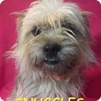 Adopt A Pet :: Snuggles - Batesville, AR
