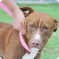 Adopt A Pet :: Brooks - Summerville, SC