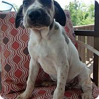 Adopt A Pet :: Luke - Huntsville, AL
