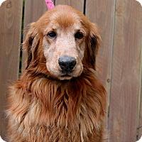 Adopt A Pet :: Dante - Los Angeles, CA