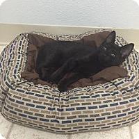 Adopt A Pet :: duncan - Bryan, OH