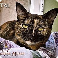 Adopt A Pet :: Petal - Van Nuys, CA