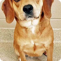 Adopt A Pet :: Lucille - Oswego, IL