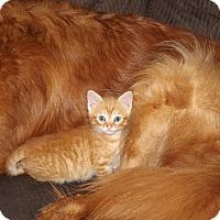 Adopt A Pet :: Fritz - Smithtown, NY