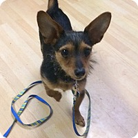 Adopt A Pet :: Bentley in CT - Manchester, CT