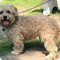 Adopt A Pet :: Hunter - Calverton, NY