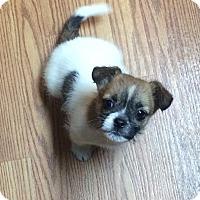 Adopt A Pet :: Josh - Denver, CO