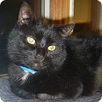 Adopt A Pet :: Reginald - Hamburg, NY