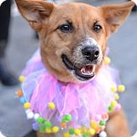 Adopt A Pet :: Tullulah - Los Angeles, CA