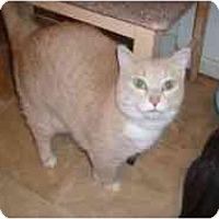 Adopt A Pet :: Healey - Hamburg, NY