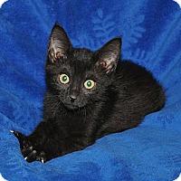 Adopt A Pet :: Cola - Richmond, VA