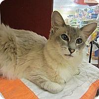 Adopt A Pet :: Sakari - Easley, SC