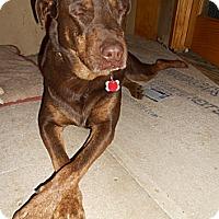 Adopt A Pet :: Maxx - North Jackson, OH