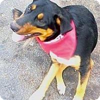 Adopt A Pet :: Jasper - Tahlequah, OK