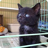 Adopt A Pet :: Jake - Island Park, NY