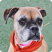 Adopt A Pet :: Fiona - Las Vegas, NV