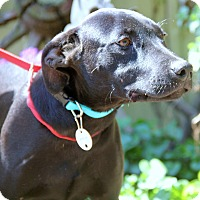 Adopt A Pet :: LANCE-loves, loves loves water - Chicago, IL