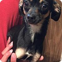Adopt A Pet :: Jess - Dumfries, VA