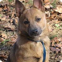 Adopt A Pet :: Starr - Bedminster, NJ