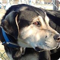 Adopt A Pet :: Sarge - Terrell, TX