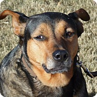 Adopt A Pet :: JoJo - Bedminster, NJ
