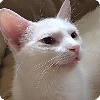 Adopt A Pet :: Sugar Pie - Ortonville, MI