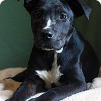Adopt A Pet :: Cole - Waldorf, MD