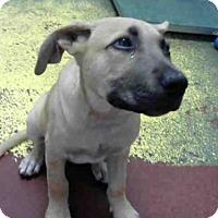 Adopt A Pet :: LITA - Atlanta, GA