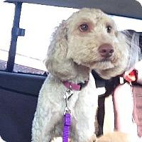 Adopt A Pet :: Ellie - Avon, NY