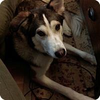 Adopt A Pet :: Bane - Crystal Lake, IL