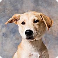 Adopt A Pet :: Popit - Houston, TX
