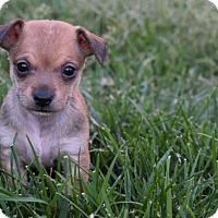 Adopt A Pet :: Tobias Sorensen - Sacramento, CA