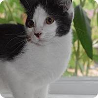 Adopt A Pet :: Aa Litter - Arya - Williamston, MI