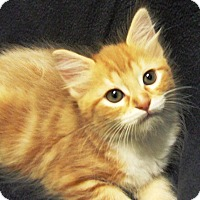 Adopt A Pet :: Sal - Watauga, TX