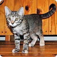 Adopt A Pet :: Willow - Parsons, KS