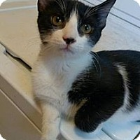 Adopt A Pet :: Robbie Plant - Middletown, OH