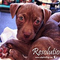 Adopt A Pet :: Resolution - Newport, KY