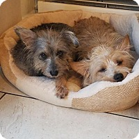 Adopt A Pet :: Max (Lil Man) and Ladybug - Tenafly, NJ