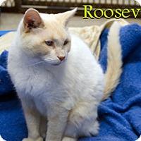 Adopt A Pet :: Roosevelt - Hamilton, MT
