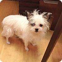 Adopt A Pet :: Jayden - St Louis, MO