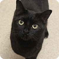 Adopt A Pet :: Tink - Naperville, IL