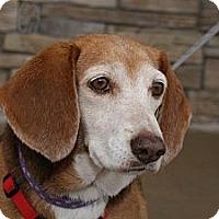 Adopt A Pet :: Jazzmin - Norman, OK