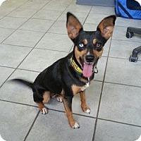 Adopt A Pet :: Joy - Crawfordville, FL