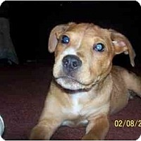 Adopt A Pet :: Jakey - Roseville, MI