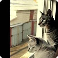 Adopt A Pet :: Finn - Harrisburg, NC