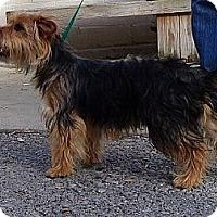 Adopt A Pet :: Sky - Brattleboro, VT