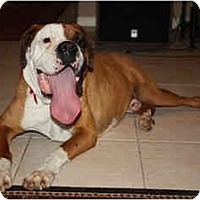 Adopt A Pet :: Beef - Savannah, GA